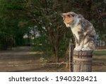 Cat Sitting On A Farm Fence...
