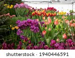 Spring Exhibition Of Beautiful...