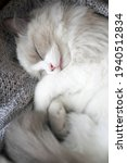 A Sleeping Small Kitten Rolled...