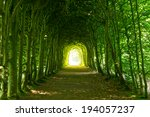 A Green Tunnel Of Trees With...