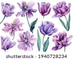 Set Of Flowers On An Isolated...