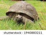 Jonathan  A Seychelles Giant...