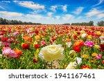 The Multicolored Garden...