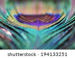 Abstract Peacock Feather...