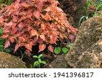 Vibrant Color Ornamental Plant...