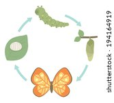 Life Cycle of Butterfly, cartoon style, vector illustration