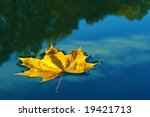 Single Leaf On Water Close Up
