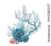 Watercolor Coral Illustration....