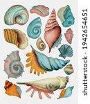 Set Of Seashells   Conch  Fan...