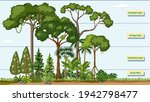 layers of a rainforest with... | Shutterstock .eps vector #1942798477