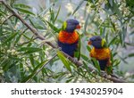 Two rainbow parrots sitting in...