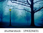 Cold Foggy Morning Park With...