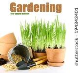 green grass in flowerpots and... | Shutterstock . vector #194343401