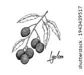 Hand Drawn Lychee Branch...