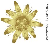 Single Head Of Passion Flower...