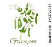 green pea plant  pea pods ... | Shutterstock .eps vector #1943721784