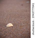 white seashell on the sandy... | Shutterstock . vector #1943777041