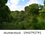 Trees and shrubs with their green foilage, Val de la Mare Arboretum (Jersey, Channel Islands)