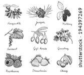 berries. hand drawing set of... | Shutterstock .eps vector #194397269