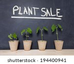 Four Bean Plants In Pots...