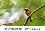 daurian redstart    Shutterstock . vector #194432171