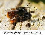 Closeup Of A Copulation In The...
