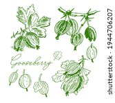 gooseberry with leaves on a... | Shutterstock .eps vector #1944706207