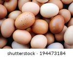 Egg  Chicken Egg