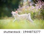 A Cute White Kitten Outdoors In ...