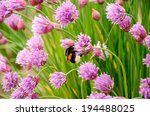 Bumblebee On The Purple Flowers