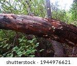 Fungi Growing In Cracks On Bare ...
