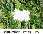 Leafy Vegetable Border  Spinach ...