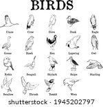 A Chart Of Types Of Birds. Ink...