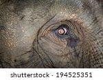 elephant eye | Shutterstock . vector #194525351