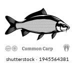 vector common carp illustration ... | Shutterstock .eps vector #1945564381