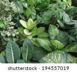 Dense Vegetation Of Foliage...