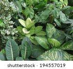 Dense Vegetation Of Foliage...