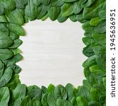 Border Of Fresh Green Leaves...