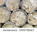 Pile Of Cut Trees  Firewood...