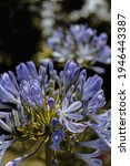 Close In A Blue Flower