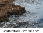 Rocks Full Of Algae Next To The ...
