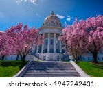 Pink magnolia and red bud flowers blooming beside stairs leading to north side of domed Missouri state capitol building in Jefferson City with blue sky.