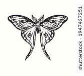 The Luna Moth  Actias Luna ...