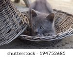 cute kitten | Shutterstock . vector #194752685