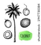 coconut fruits and palm tree.... | Shutterstock .eps vector #1947730384
