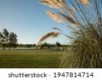 Countryside Landscape. View Of...