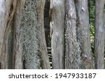 Small photo of Zoom on a fence made of natural wood greyed out by time. Angel hair is hanging on it.