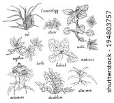 collection of hand drawn herbs... | Shutterstock .eps vector #194803757