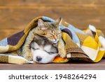 A Kitten And A Puppy Lie Under...