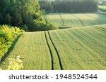Early Summer Green Wheat Fields ...